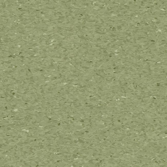Fern-3040405