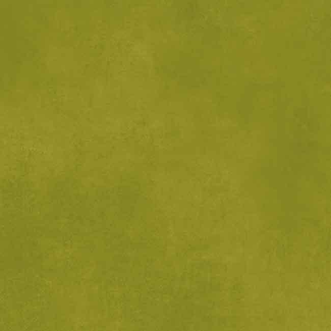 Kiwi 423778